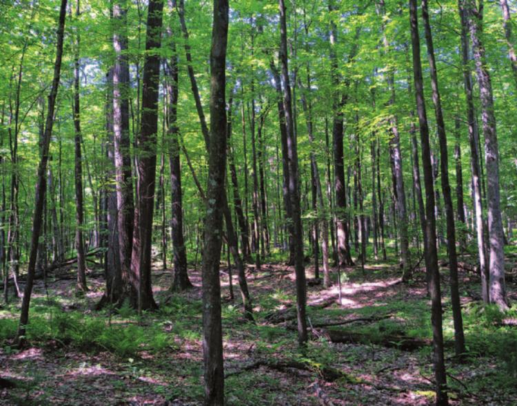 """تحقيق/ """"بارونات"""" تنهب الغابات بتزكية من نافذين في الإدارة العامة للغابات"""