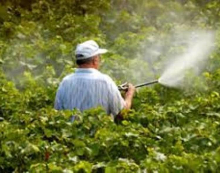 في ظل الاستعمال غير الرشيد للمبيدات الزراعية: توجس من التعدي على حق المستهلك في منتجات غذائية خالية من المضار الصحية